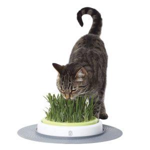 cat it senses garden